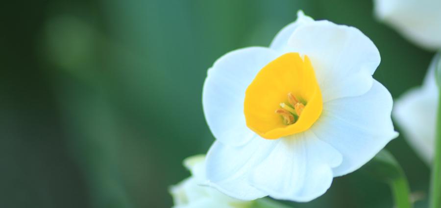 Flower8900x425